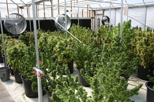 electrical costs of growing marijuana. Black Bedroom Furniture Sets. Home Design Ideas